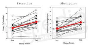 Changements individuels de la concentration urinaire de calcium et de l'absorption intestinale de calcium sur 24h en réponse à une alimentation « faible » (0,7g/kg) et « élevée » (2,1g/kg) en protéines chez 20 femmes en bonne santé