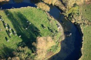 grass-fed cows wellness CSR policy